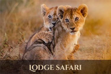 lodge safari Tanzania